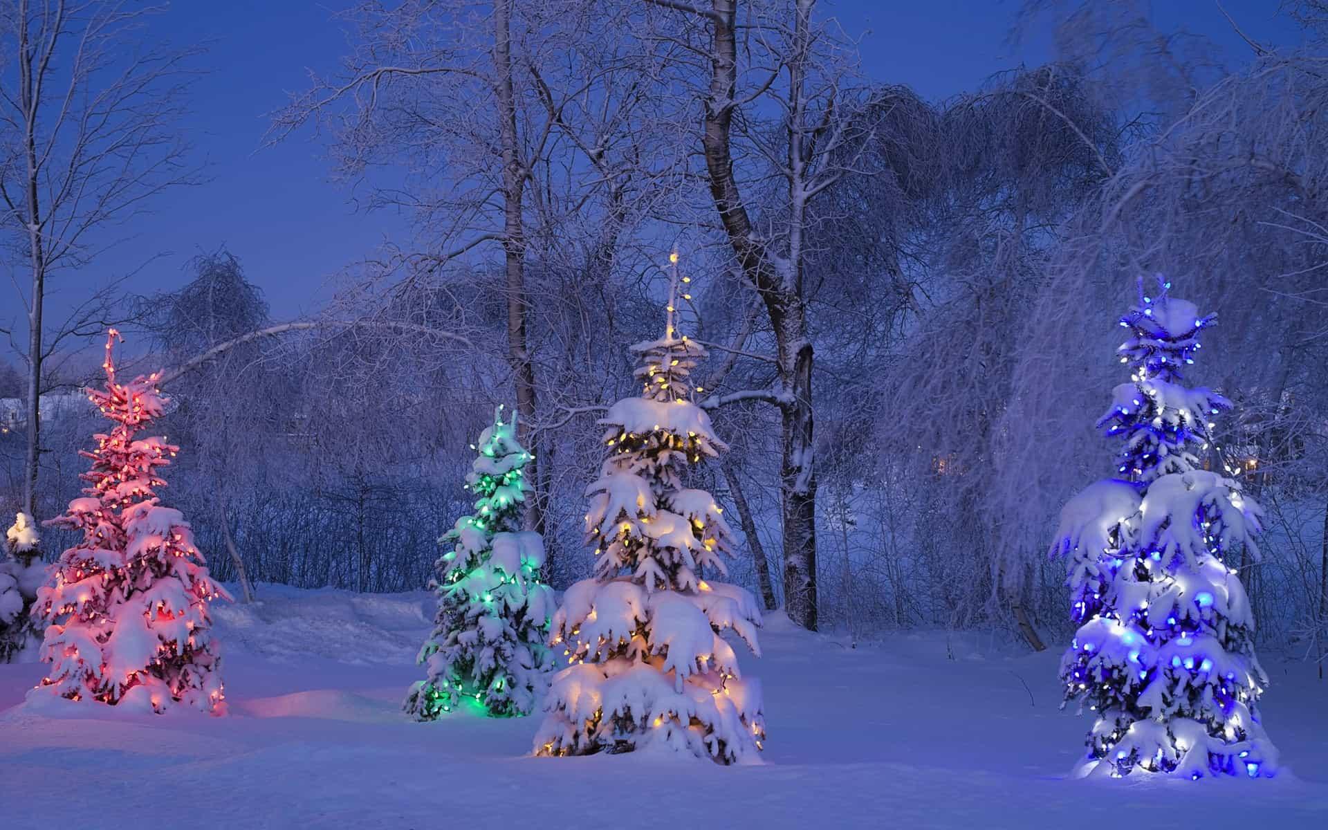 snowy lit trees winter canada - Desktop Christmas Tree